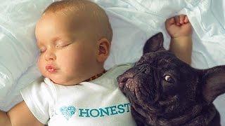 Bulldog and Baby Compilation