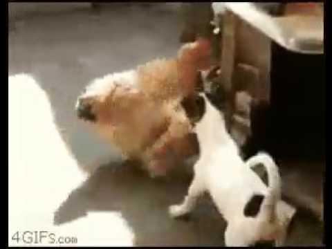 animal mix sex....