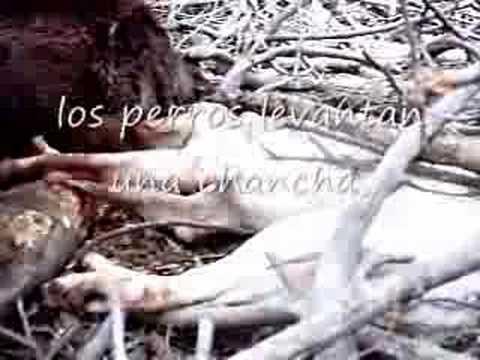 Caza del jabali con perros y cuchillo Flotada Caza mayor