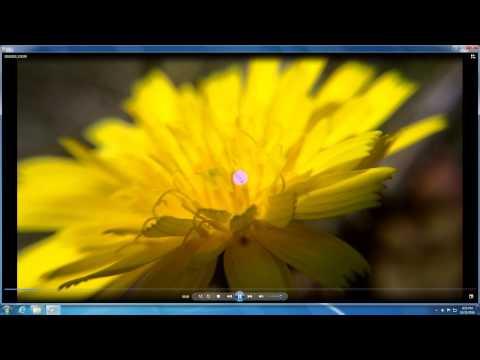Xxx Mp4 How To Open MP4 Files Windows 7 Windows Media Player Codec 3gp Sex