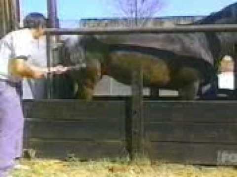 Xxx Mp4 Horse Kick 3gp 3gp Sex