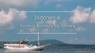 Perama Tours: hunting komodo by camera