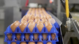 What makes eggs 'organic'? It depends on who you ask
