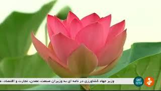 Iran Anzali lagoun wetland report, Gilan province گزارشي از تالاب انزلي استان گيلان ايران