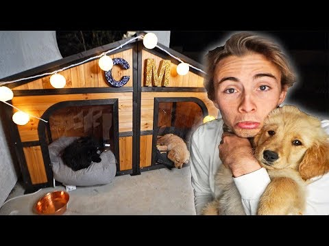 BUILDING MY PUPPY HER DREAM DOG HOUSE