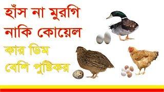 health tips in bangla 2017 ! হাঁস না মুরগি  নাকি কোয়েল কার ডিম বেশি পুষ্টিকর   জেনে নিন