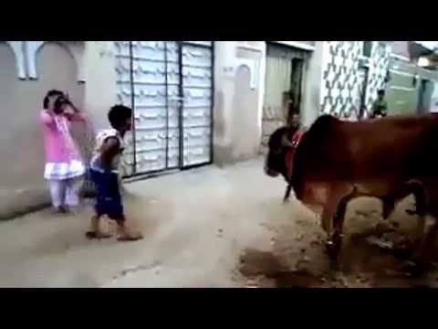 Small Boy and Girls are talking with Cow ( funny video)