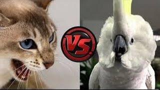 Funny Cats vs parrots Compilation 2016