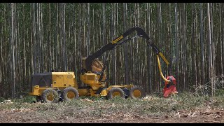 Harvester Tigercat 1185 - Eucalyptus