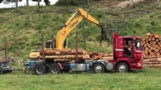 Forestry NZ logging  truck loading Dec 2016 for export to China มาดูกันว่าเขาโหลดไม้สนใส่รถบรรทุกพ