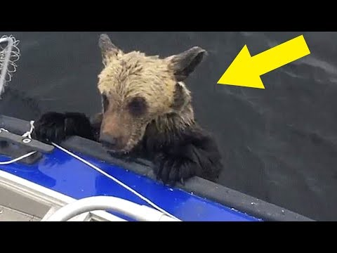 When Guy Realized Why Bears Were Climbing On His Boat It Was Almost Too Late To Escape Alive
