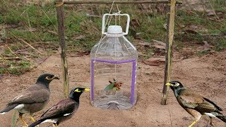 Simple Bird Trap Technology Make from Bottle Drop down in Hole - Very easy bird trap