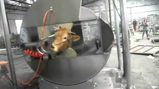Living Cattle Pneumatic Ritual Type Halal Killing Box 标清