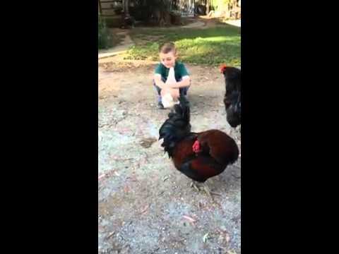 A boy hugs a hen