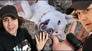 MY DOG DESTROYED DAVID