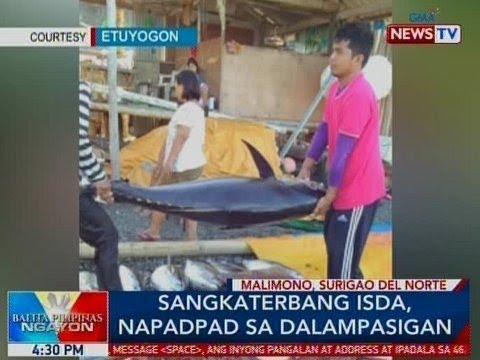 Xxx Mp4 BP Sangkaterbang Isda Napadpad Sa Dalampasigan Sa Surigao Del Norte 3gp Sex