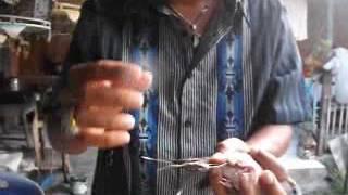 Cara menjinakan perkutut dan merapikan ekor berantakan
