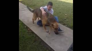 Boy Bursts Into Tears As He Reunites With His Missing Dog
