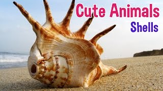 SEASHELLS - Animals For Kids - Seashell photos with classical music for children by Oxbridge Baby