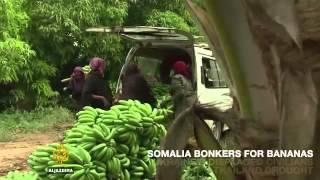 5975 economics agriculture 002 002 Al Jazeera On Al Jazeera  Somalia goes bonkers for bananas