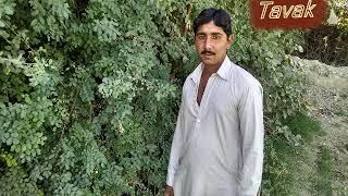 Urs Chandio Old Mehfil Video Songs Tavak Ali Bozdar