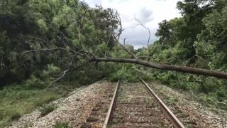 Así quedó Lakeland tras el paso de Irma/ Lakeland's Hurricane Irma Aftermath
