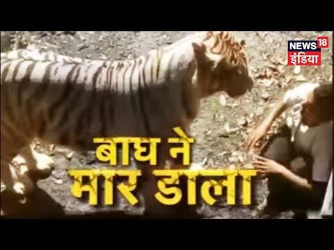 Xxx Mp4 Delhi Zoo Me Yuvak Bagh Ke Baade Me Ghusa Hamle Me Maut Delhi Zoo Tiger Attack News18 India 3gp Sex