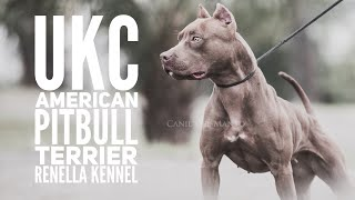 UKC American Pitbull Terrier Züchter Vorstellung - Renella Kennel