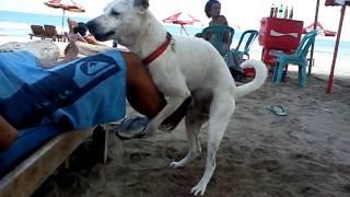Kuta Doggz Horny