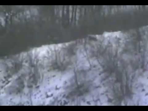 Lov na divlje svinje 2012