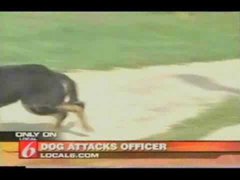 Polícia usa pistola Taser contra cachorro furioso