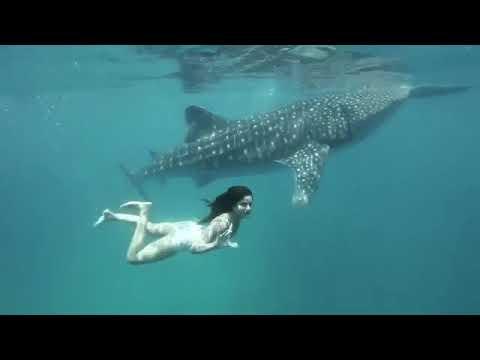 Xxx Mp4 Katrina Kaif Swimming Hot Sexy Moves 3gp Sex