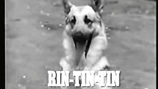 LAS AVENTURAS DE RIN TIN TIN   SERIE DE TV  ESPAOL LATINO    YouTube