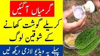 Every Bitter Melon (Karela) Eater Must Watch This Video   The Urdu Teacher