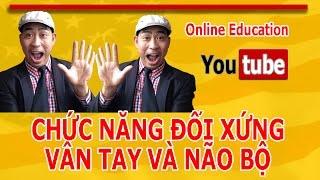 Online Education: Sinh Trắc Học Dấu Vân Tay Chức Năng Đối Xứng Dấu Vân Tay- Não Bộ Vlog 8_Youtube
