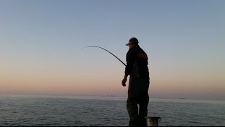 Pèche au Mulet 🎣Concentration Extrême🎣التركيز الشديد🎣 صيد البوري