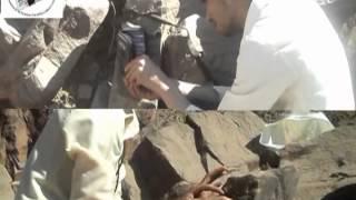 البحث عن النمر العربي | اليمن | حجة | وادي شرس|  محمد القُدَمي
