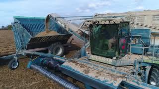 Peanut Harvest - Baucom Family Farms NC