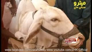| Cow Mandi | 2016 | Maweshi Mandi | Metro Karachi | Sohrab Goth Gai Mandi |