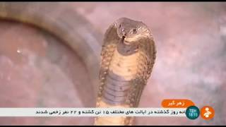 Iran Snake milkers, Razi Vaccine & Serum Research Institute زهرگيري مار انستيتو رازي