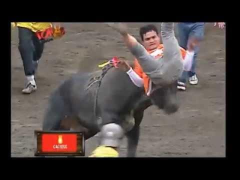 Mejor de Toros a la Tica Zapote Costa Rica 2012 13