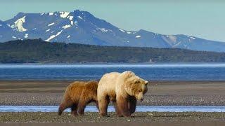 Grizzly Bear Hunts For Clams | Wild Alaska | BBC Earth