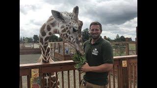 Animal Adventures with Jordan: Reticulated Giraffe
