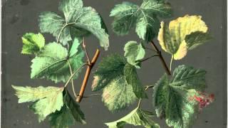 J.C. Bach - Sextet in C major
