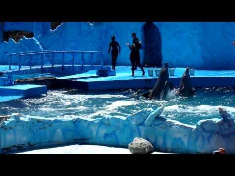 HD Mundo Marino San Clemente Show Mundo Marino Orca Ballenas delfines Buenos Aires Verano 2010 1 3