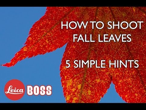 5 Tips for Photographing Close-Up Fall Leaves