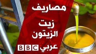 زيت الزيتون من فلسطين الى بريطانيا - برنامج مصاريف