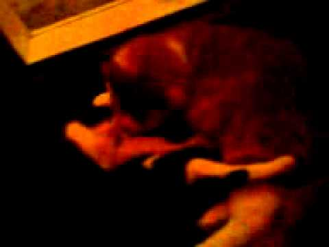 Xxx Mp4 Kitty Porn 3GP 3gp Sex