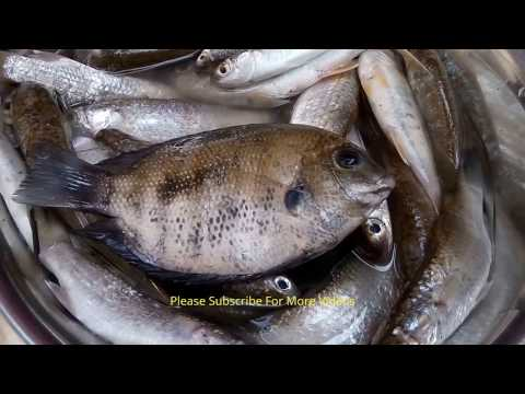 Yummy Village Style Fish Curry Recipe | Cooking Small Fish In My Village Indian Style Food