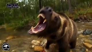 وثائقي حيوانات خارقة القوة - الاسد ضد النمر من الاقوى - National Geographic 2016
